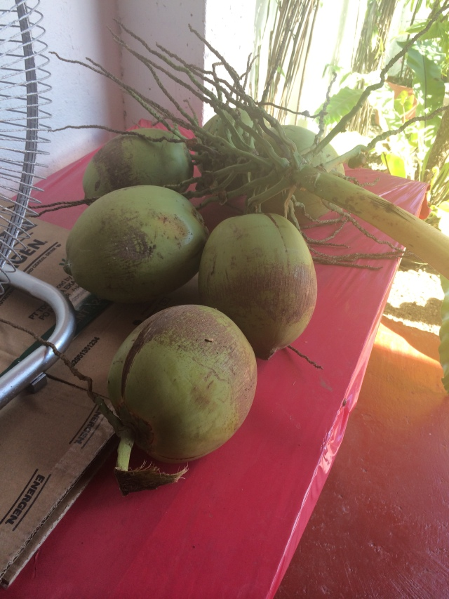 Fresh coconut water (Katherine Hart, 2015)